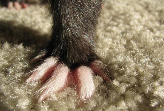 Ferret Footies